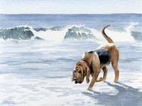 Bloodhound at the Beach