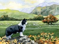 Border Collie Sheep