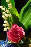 Lily of the Valley and Rose