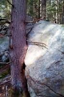 Tree and Rock Kissing