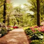 """The Azalea Forest"" by JessicaJenney"