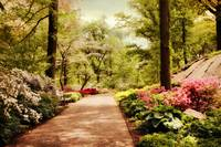 The Azalea Forest