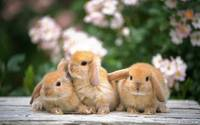 3 Baby Creme Colored Bunny Rabbits Play