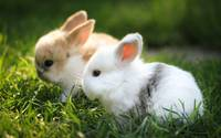Adorable Bunny Rabbits Nibble On Green Grass