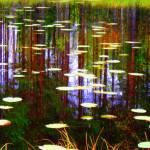 """Fall pond"" by paulihyvonen"