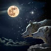 Wolves in the Moonlight.