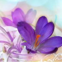 Crocus and Lily of the Valley