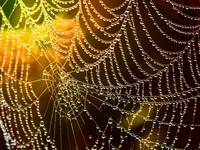 Cobweb with Dewdrops
