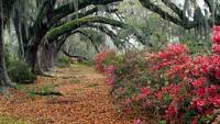 Magnolia Tree Plantation, Charleston, SC US