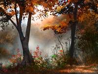 Morning Mist In The Autumn Forest