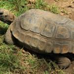 """Amazon River Turtle"" by rhamm"
