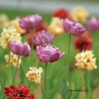 Spring Flowers Art Prints & Posters by Steve Shelasky