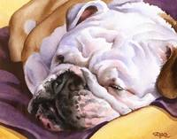 Bulldog Sleeping