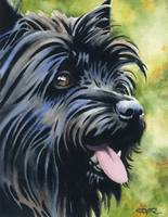 Black Cairn Terrier