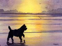 Cairn Terrier Sunset