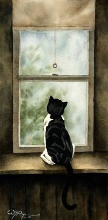 Cat Looking Out