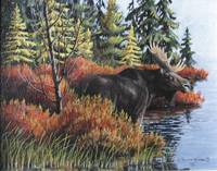 Early Morning Bull Moose