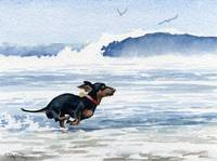 Dachshund Running on Beach