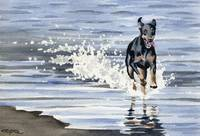 Doberman Beach 1