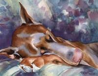 Doberman Sleeping