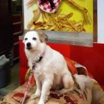 """""""Dog at Carnival"""" by susansartgallery"""