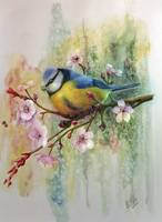 Blue Tit and Plum Blossoms