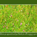 """Yellow Bird & Butterfly Meadow w text"" by SandraGouldFord"