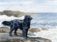 Flat Coated Retriever at the Beach