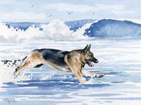 German Shepherd Beach 2