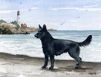 Black German Shepherd at Beach
