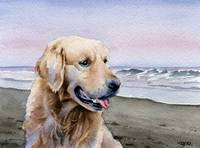 Golden Retriever at the Beach 2