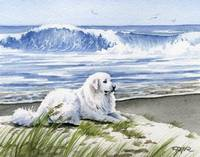 Great Pyrenees at the Beach