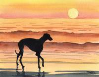 Greyhound Sunset