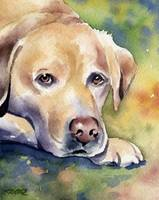Labrador Retriever 4
