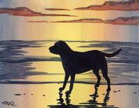 Labrador Retriever Sunset