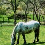 """Appaloosa in Pasture"" by susansartgallery"