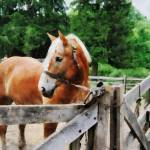"""Palomino in Paddock"" by susansartgallery"
