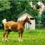 """Palomino in Pasture"" by susansartgallery"