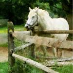 """White Horse in Paddock"" by susansartgallery"