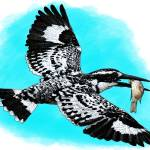 """Pied Kingfisher"" by inkart"