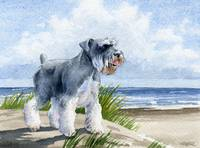 Miniature Schnauzer at the Beach