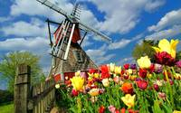 Windmill Surrounded By Colorful Tulip Flowers