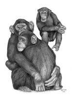 Chimpanzees Pointallism