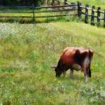 """Cow Grazing in Pasture"" by susansartgallery"
