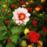"""Spring Patchwork"" by RCdeWinter"