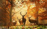 A Herd Of Deer In An Autumn Forest Clearing