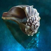 Aquatic Dreams IV Art Prints & Posters by George Oze