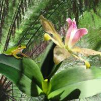 Wild Orchid and Tree Frog Art Prints & Posters by I.M. Spadecaller