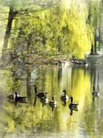 Geese by Willow