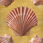 """Scallop Shells"" by dominicwhite"